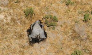 Bí ẩn hàng trăm con voi chết trong tư thế lạ ở Botswana