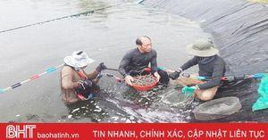Vì đâu giá tôm vụ xuân hè ở Hà Tĩnh giảm sâu?