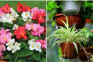 Khoa học kiểm chứng 5 loài cây giúp bạn miễn dịch ung thư lại mang về tài vận dồi dào cho cả gia đình