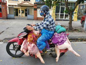 Vì sao giá lợn hơi ở Bình Thuận cao nhất cả nước?