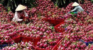 Chế biến để nâng cao giá trị nông sản xuất khẩu