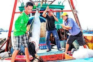 Nha Trang: Phát triển nông nghiệp hướng biển
