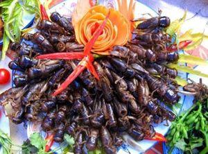 Bé 3 tuổi nguy kịch vì ăn dế: Cần biết về 'đặc sản' côn trùng?
