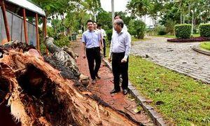 Gió cấp 8 'thổi bay' 50 tỷ đồng thiệt hại cây xanh tại Huế