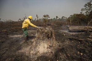 Rừng Amazon vẫn cháy sau một năm