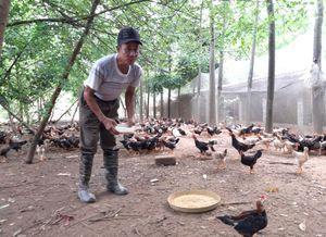 Giải bài toán môi trường trong chăn nuôi