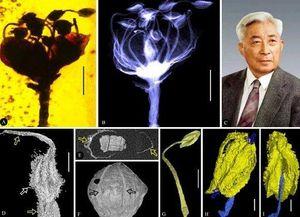 Con người hiện tại hái được hoa từ thời viễn cổ 15 triệu năm