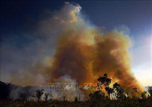 Thảm họa cháy rừng Brazil qua 'lời kể' của báo đốm Amanaci
