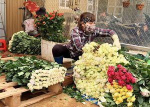 Hết thời phải đổ bỏ vì COVID-19, giá hoa hồng Đà Lạt tăng vọt