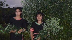 Khám phá bí mật của hai học sinh nghèo sáng chế thuốc trừ sâu từ lá cây rừng