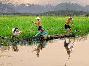 'Kho báu gene' trong 21 giống lúa ma ở Việt Nam