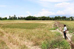 Cam Lâm: Chậm chuyển đổi cây trồng