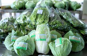 Rau VietGAP khẳng định tại siêu thị