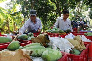 Nông sản Việt ra thị trường thế giới - Bài cuối: Nâng cao năng lực thích ứng
