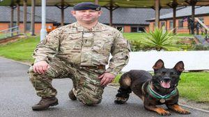 Chú chó khuyết tật chiến đấu chống khủng bố được quân đội Anh trao tặng huân chương cao quý