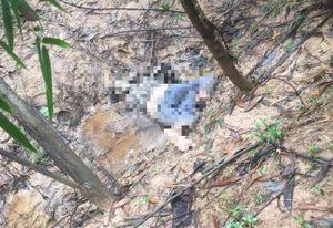 Vụ thi thể đang phân hủy trong rừng tràm: Cánh tay nạn nhân có nẹp vít