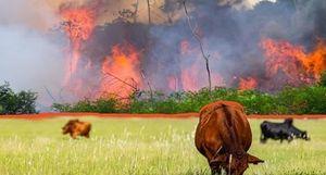 Phá rừng và những nền tài chính rực lửa
