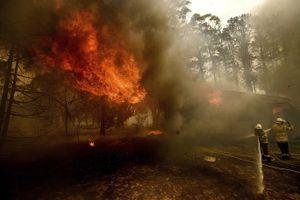 Startup tạo ra cách ngăn ngừa cháy rừng