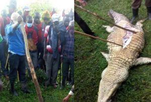 Dân làng lùng giết rồi mổ bụng cá sấu đòi xác