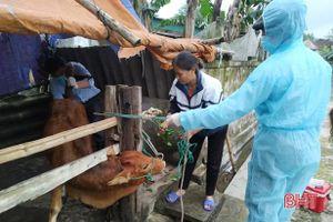 14 con bò ở huyện Lộc Hà mắc bệnh lạ