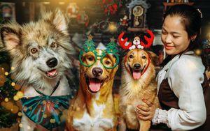 Câu chuyện xúc động đằng sau bộ ảnh Giáng sinh của những chú chó bất hạnh