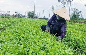 Sống chung với mưa lũ, sản xuất nông nghiệp thích ứng với thiên tai