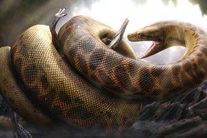 Kinh hãi loài rắn khổng lồ chuyên 'làm thịt' cá sấu