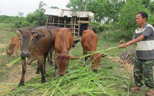 Hà Tĩnh: Giảm nghèo nhanh và bền vững