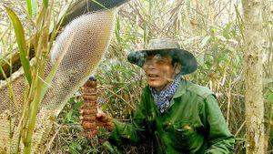 Thị trường mật ong thật giả lẫn lộn: Mua bằng lòng tin