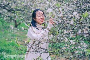 Mê mẩn mùa hoa mận nở trắng trời Mộc Châu