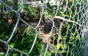 Người đàn ông tử vong khi kéo dây điện ra vườn