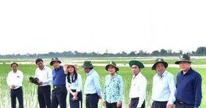 Bộ trưởng Nguyễn Xuân Cường thăm và làm việc tại Viện Lúa ĐBSCL