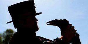 Vụ mất tích bí ẩn của con quạ nổi tiếng tháp London