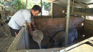 Quảng Nam: Chủ động phòng chống rét hại cho đàn gia súc, gia cầm