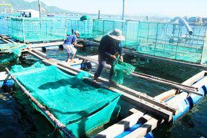 Cam Ranh: Dành 9 tỷ đồng thực hiện nhiệm vụ vớt rác thải ven biển