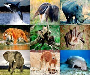 Loài động vật hoang dã nào phải dừng nhập khẩu?