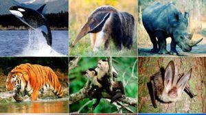 Ngà voi ma mút đã qua chế biến có được nhập khẩu?