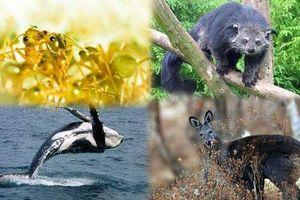 Những loài động vật nào tỏa mùi thơm đặc biệt?