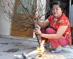 Có nên đốt gốc cành đào để giữ hoa tươi lâu?