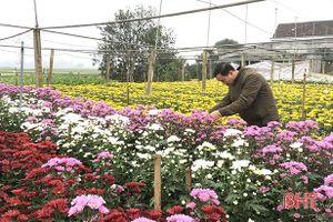 Những vườn hoa ở Đức Thọ sẵn sàng phục vụ tết