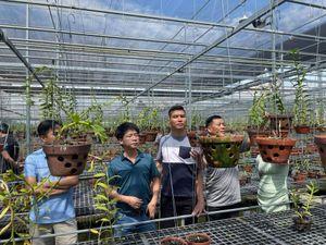 Doanh nhân Ngô Gia Bình: Thị trường hoa lan ngày càng hấp dẫn các nhà đầu tư