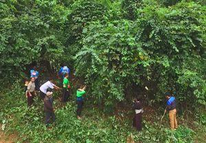 Những bản làng phía Tây ở Thanh Hóa rũ bỏ 'bão trắng', lá ngón để hồi sinh
