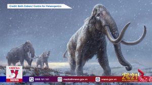 Giải mã ADN voi ma mút cách đây hơn 1 triệu năm