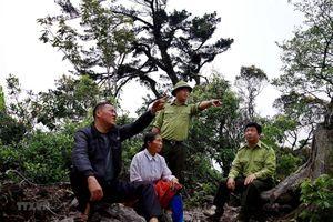 Hòa Bình: Người Mông giữ rừng nguyên sinh phát triển du lịch bền vững