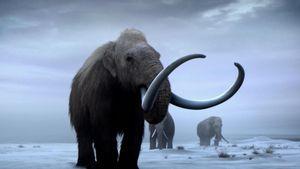 Giải mã ADN loài voi ma mút sống cách đây hơn 1 triệu năm