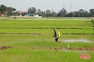 Tập trung kiểm soát, phòng trừ sâu bệnh cho cây trồng vụ xuân ở Hà Tĩnh