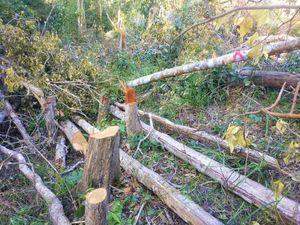 Chuyển công an vụ phá rừng giáp ranh Đắk Lắk- Gia Lai