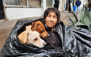 Bà lão nhất quyết sống trong túi rác 8 năm không chịu đi, lý do đằng sau khiến ai nghe cũng rơi nước mắt