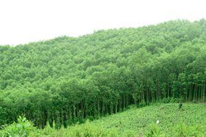 Công đoàn ngành Nông nghiệp và Phát triển nông thôn trồng hơn 2.000 cây xanh