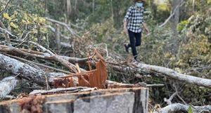 Chuyển hồ sơ sang Công an điều tra vụ phá rừng giáp ranh